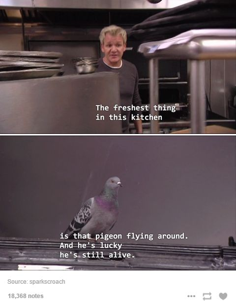 Ramsay!! Keep those eyes off that pigeon.