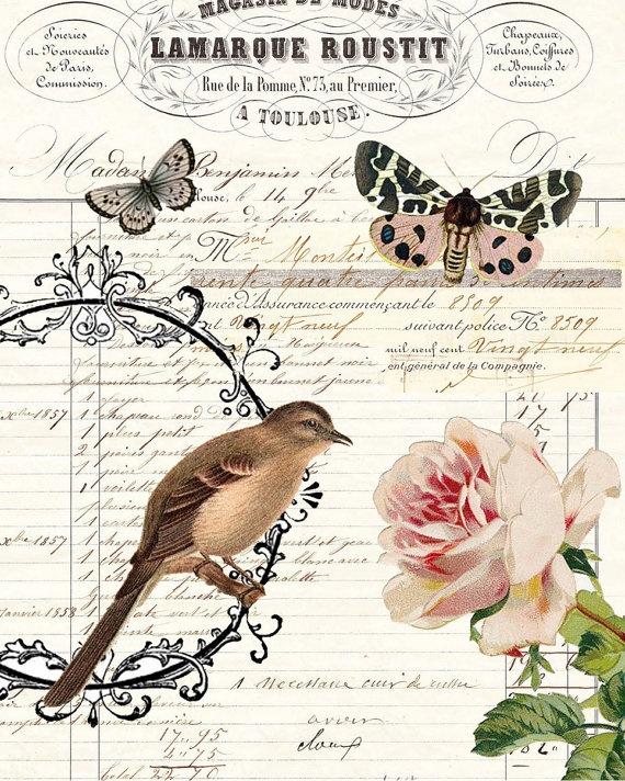 Art Print Botanical Collage digital vintage ledger French bird butterflies floral FRAMED via Etsy
