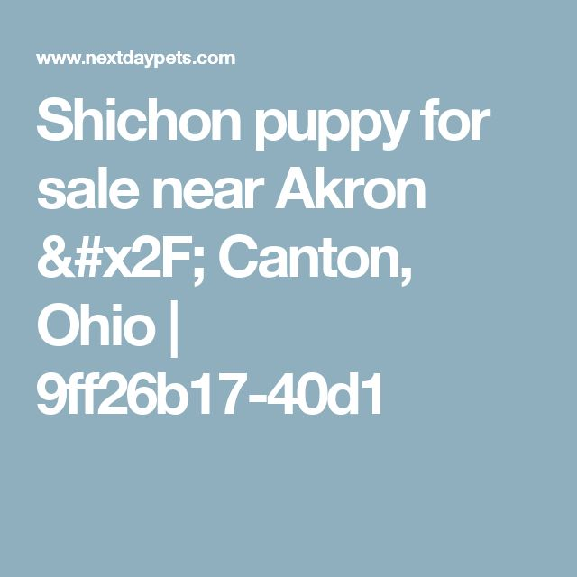 Shichon puppy for sale near Akron / Canton, Ohio | 9ff26b17-40d1
