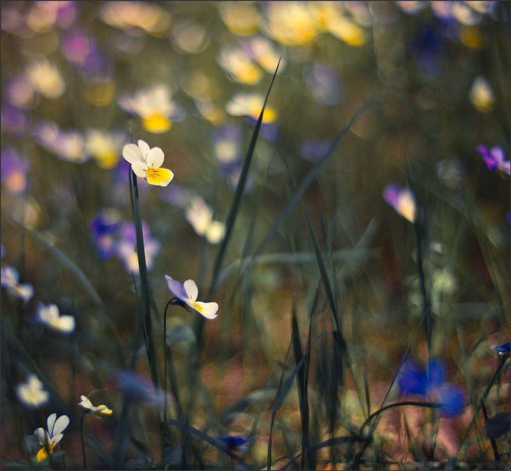 Untitled by Elena  Khazina on 500px