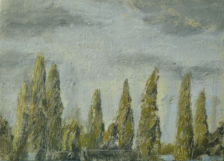 Cypress Trees in Meeanee - sold