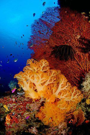 Una escena de arrecife con corales blandos y gorgonias de las Islas Salomón