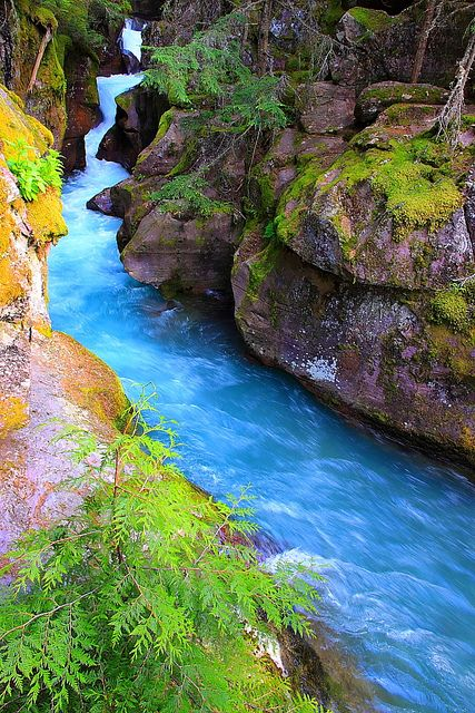 Avalanche Creek, Glacier National Park; photo by .I-Ting Chiang
