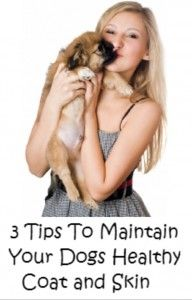 3 Important Tips To Keep Your Dog Happy And Healthy - http://pet-wellness-update.com/best-dog-shampoo/
