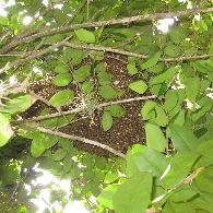 Critter & Pest Defense offers honey bee removal and wasp control services. We have Certified pest control operator provides same day service and guaranteed work.  You can call 407-373-4515 so that we can help you safely #remove the honey bees from your home or office. More Info: http://www.critterandpestdefense.com/services/bee-removal/