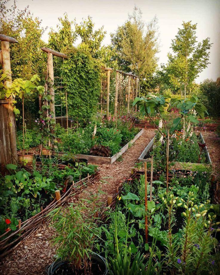 Nous aimons faire pousser plus de légumes cette année. Nous avons three frontières pour grandir
