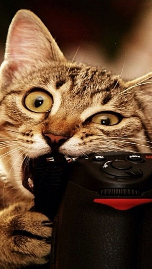 Funny Cat iPhone Wallpaper WallpaperSafari Funny cat