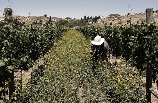 Craggy Range - Calvert Vineyard