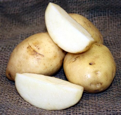 'Kennebec' potatoes. 80-85 days to maturity.