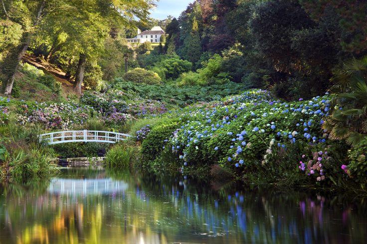 Hydrangea Valley in July, Trebah Garden, Cornwall