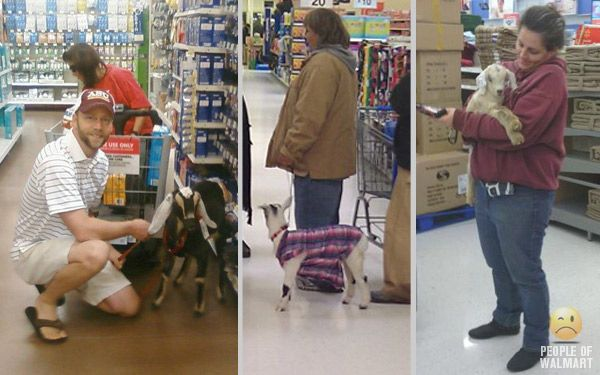 Yet another reason to get a goat! Apparently you can bring it to walmart. Haha