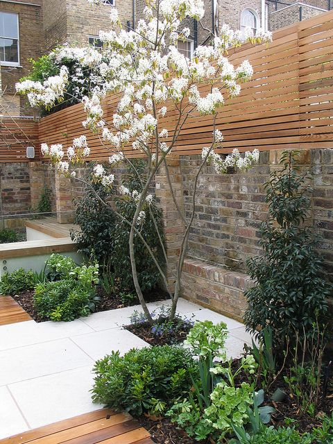 white pavers specimen tree sq flanked with dafne charlotte rowe garden design