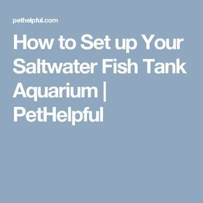 how to set up your fish tank