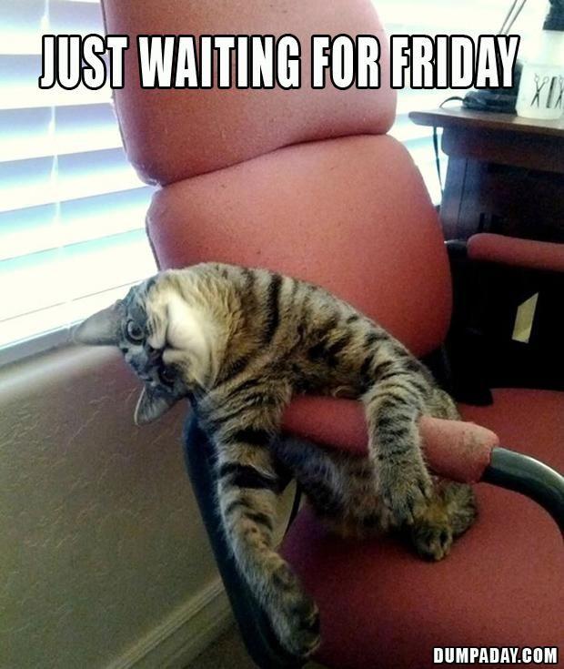 catsday, catursday...