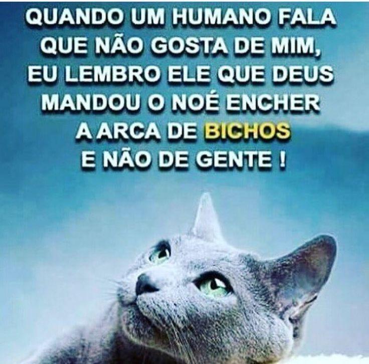 ❤❤ #amoanimais #amogatos #amocachorro #cachorro #gato #filhode4patas #maedegatos #maedecachorro #paidecachorro #paidegato #maedepet #pet #petmeupet