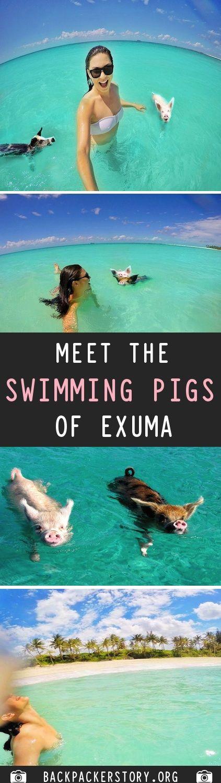 Meet The Swimming Pigs of Exuma, Bahamas