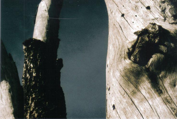 #gray #tree #sky #pentax #film MADDY HOPE 2013