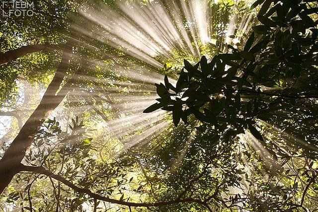 Costa Rica - Rincón de la Vieja $250 50x75cm professional paper. Post not included by ebmfoto.com