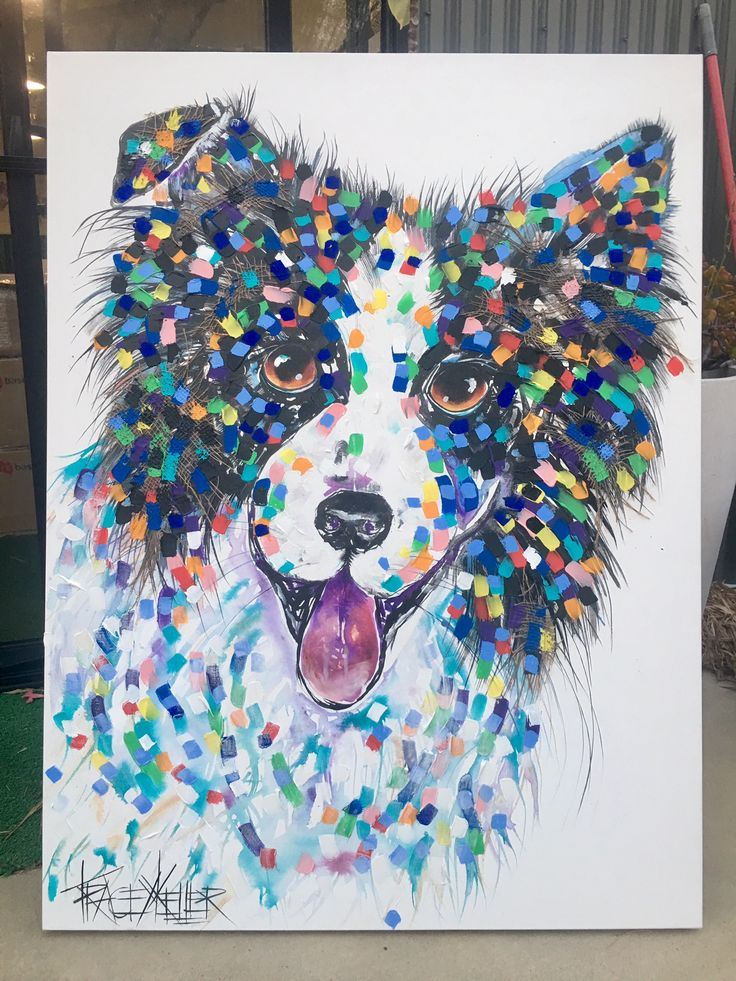 pet portraits by tracey keller | border collie