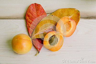 Colorful flat layout of fresh apricots in white bowl, with hand painted leavves