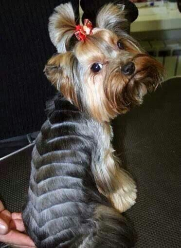 Creative haircut for Dixie?
