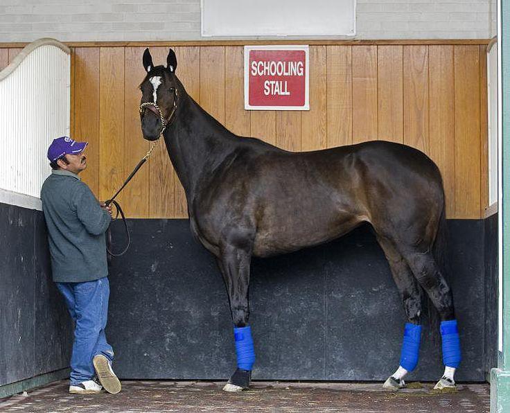 The huge Zenyatta. She stands 17.2 a full hand taller than Secretariat and Man O' War.