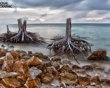 wicked: Photos, Beautiful Pine, Tree Stumps, National Geographic, American Memories, Memories Parks, Islands, Be Beautiful, Trees Stumps