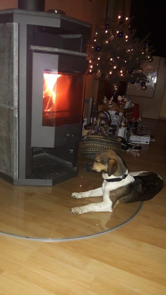 Hunde Foto: Anja und Harley - Unser Genießer Hier Dein Bild hochladen: http://ichliebehunde.com/hund-des-tages  #hund #hunde #hundebild #hundebilder #dog #dogs #dogfun  #dogpic #dogpictures
