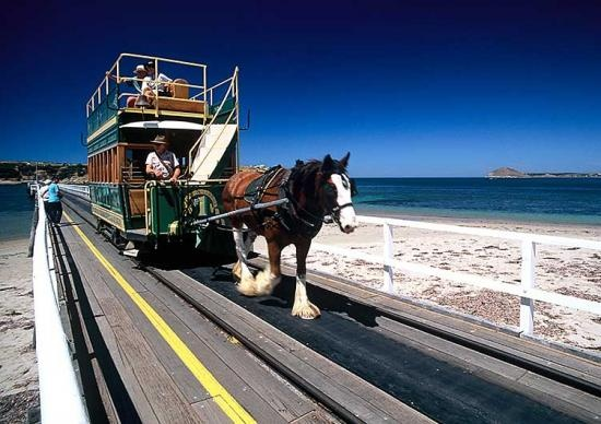 Victor Harbor - Horse Drawn Cart - The way to go to get to Granite Island