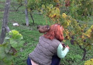 Alycea and Maggie harvesting