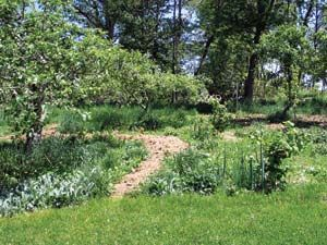 Make your garden more productive by exploring forest gardening. You can learn how to mimic a natural forest, and create a productive fusion of garden, orchard and woodland.