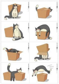 Hvor er katten i forhold til papkassen