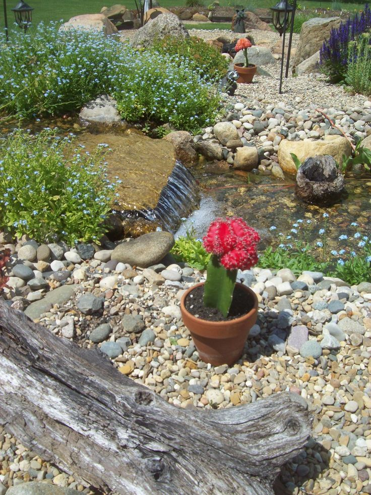 153 best living the pond life images on pinterest pond for Garden pond life