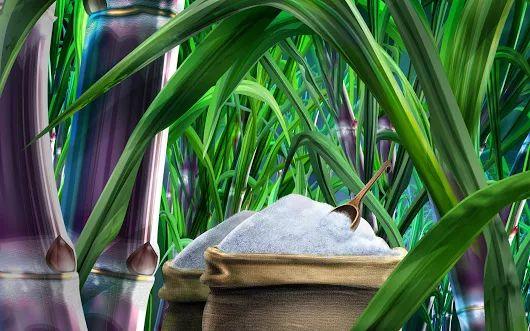 షుగర్ షేర్లకు కస్టమ్స్ సుంకం షాక్ Customs Duty on Sugar Exports  http://www.profityourtrade.in/news-list-view.php?vid=653
