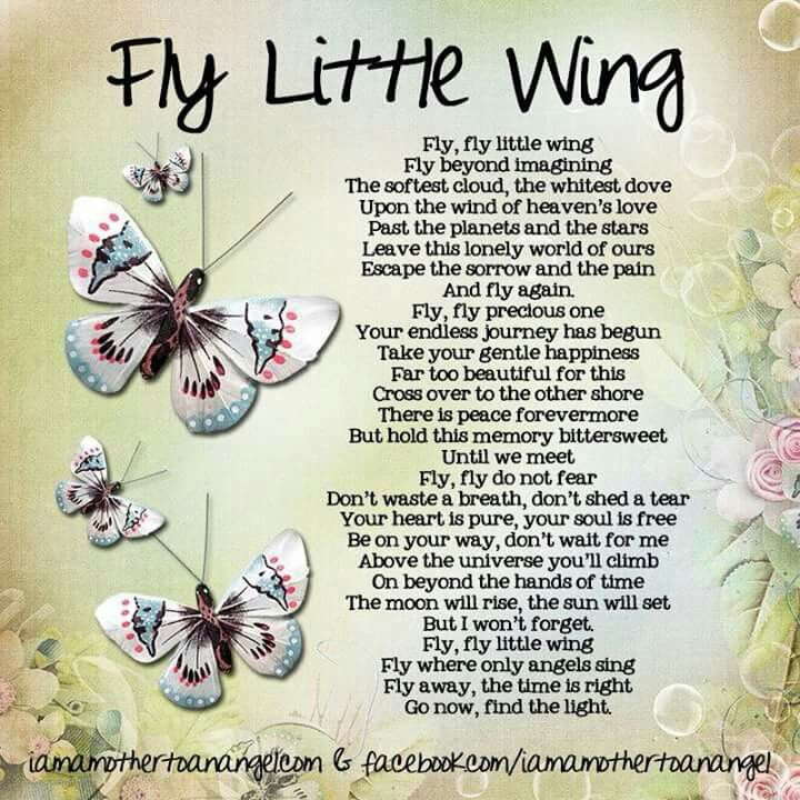 THIS ONE WILL MAKE YOU TEAR UP. Fly little wing.. the struggle is over..no more pain or sadness... it's alright... I'm here beside you.. BUT I DON'T WANT TO STAY WITHOUT YOU ! ♥ ♥ ♥,,,,,IN THE LOSS OF A LOVED ONE - CALMING and BEAUTIFUL. B.