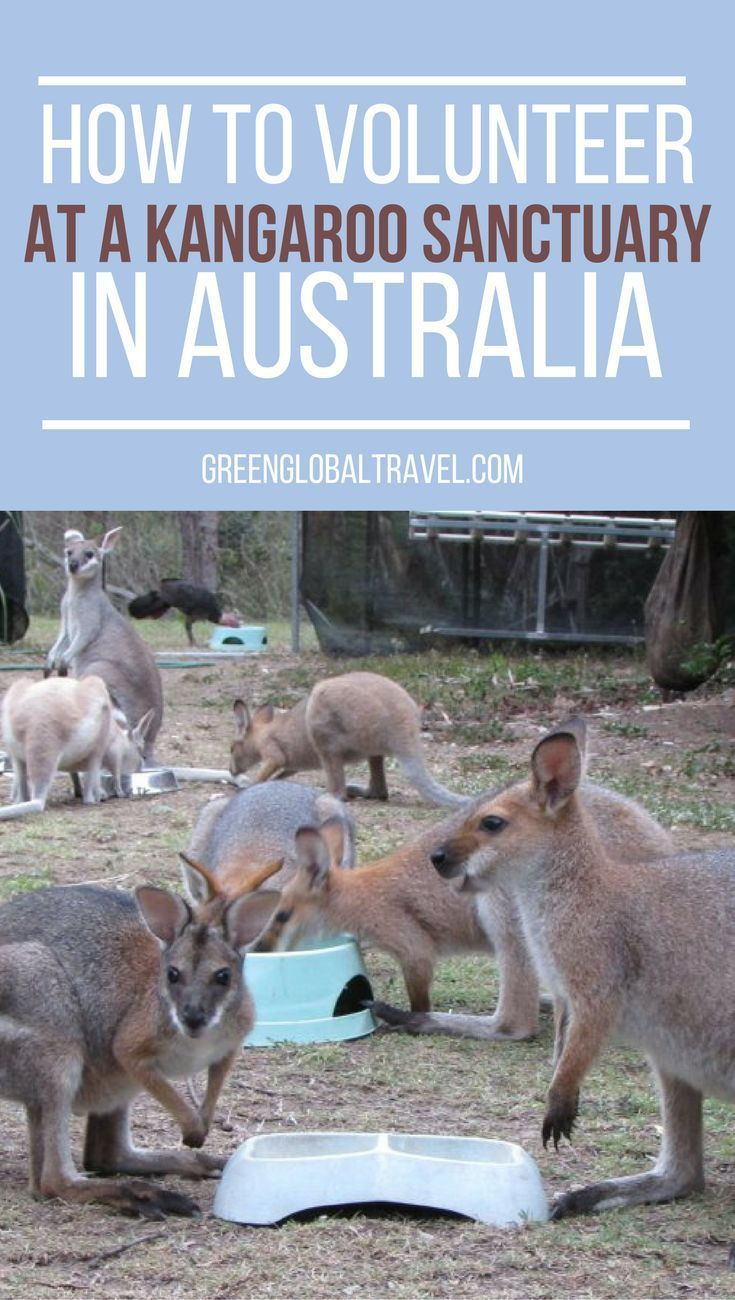 Volunteering At A Kangaroo Sanctuary My Australian Adventure Volunteer Travel Travel Destinations Australia Volunteering With Animals