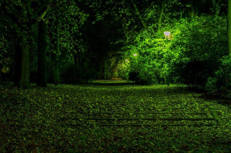 #noc #zielono #Białystok fot. Dawid Gromadzki
