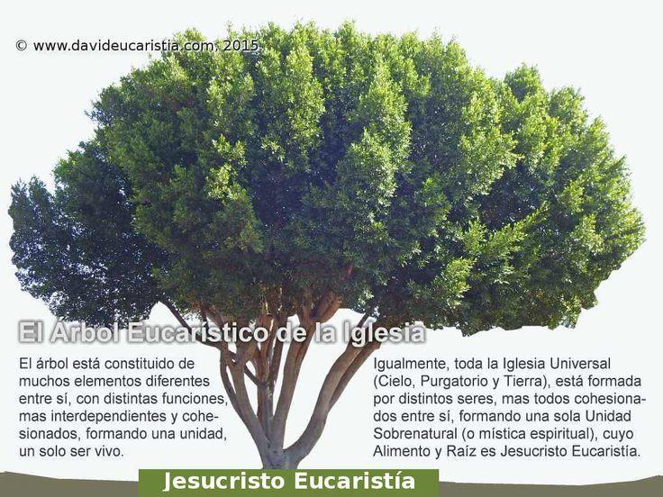 DAVID EUCARISTÍA: El Árbol Eucarístico de la Iglesia Universal