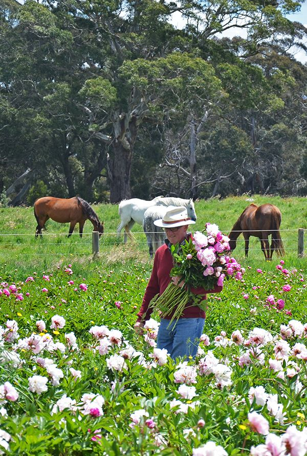 37 best picnic at hanging rock images on pinterest for Flower hill farms