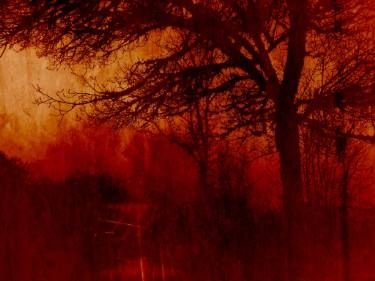 "Saatchi Art Artist Gonçalo Castelo Branco; Photography, ""NOT EVEN THE TREES '17 - Limited Edition 1 of 10"" #art"