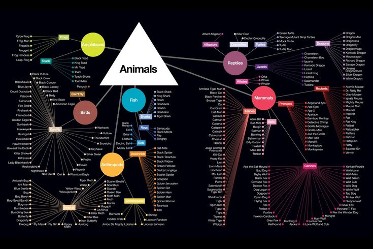 Animal Taxonomy of Comic Book Characters - Tim Leong