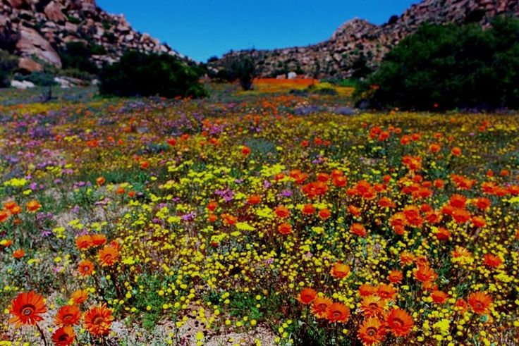 (2) Unforgettable Namaqualand - Africa is Back - Quora