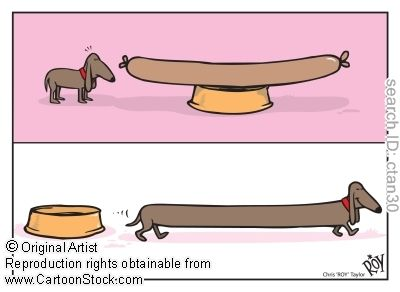 How wiener dogs are made