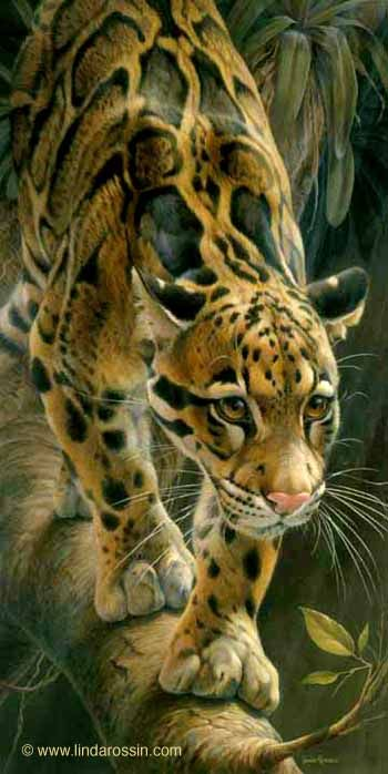 """Linda Rossin - Wildlife Artist  """"Out on a Limb""""."""
