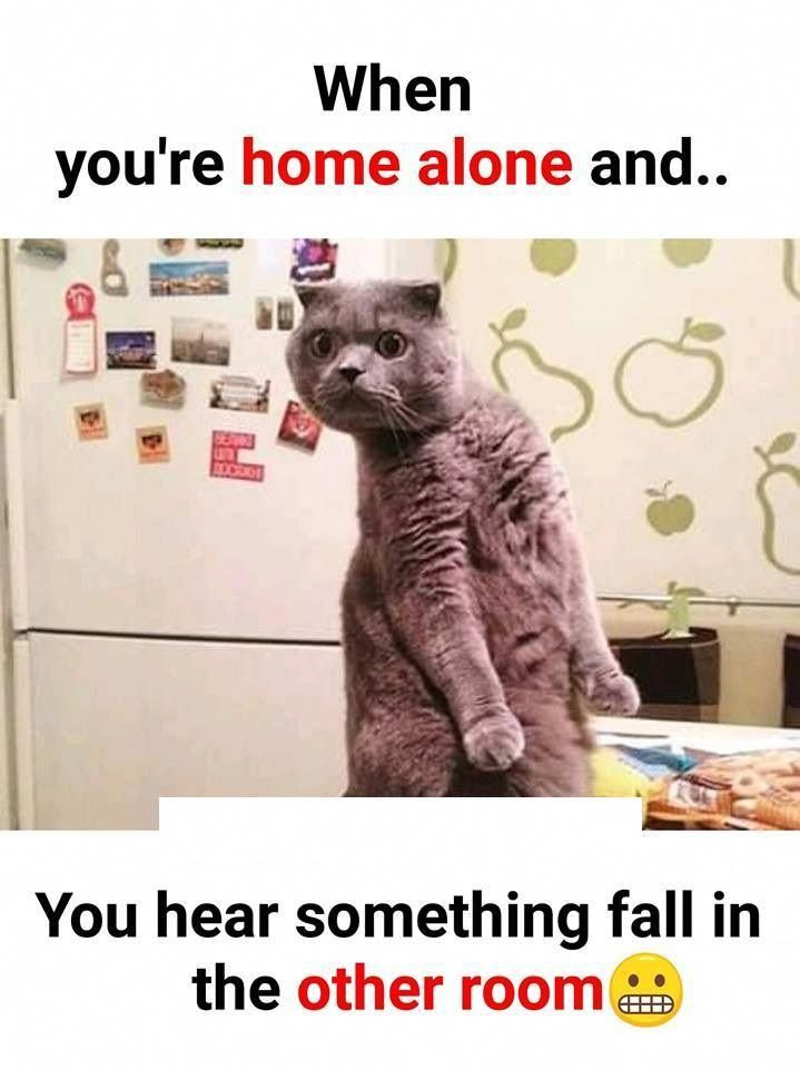 Home Funny Memes In Www Fundoes Com To Make Laugh Kittensfunny Very Funny Memes Crazy Funny Memes Funny Facts