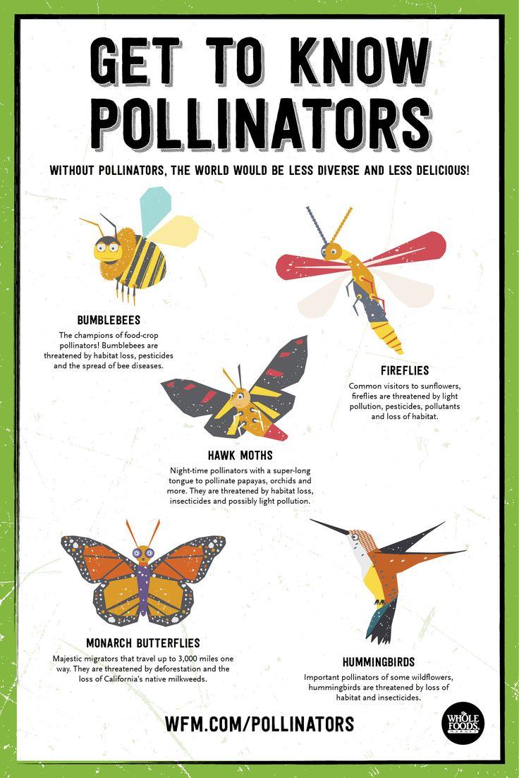 Plant Seeds: Protect Pollinators! Get to know Pollinators. | WholeFoodsMarket.com