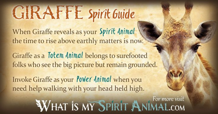 The most in-depth Giraffe Symbolism & Giraffe Meanings! Giraffe as a Spirit, Totem, & Power Animal. Plus, Giraffe Dreams, too!
