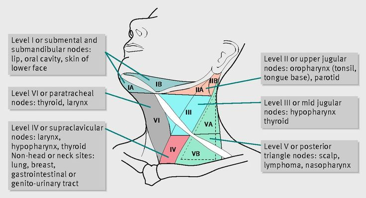 Lymph Node Groups Of The Head And Neck Region With Manual Guide