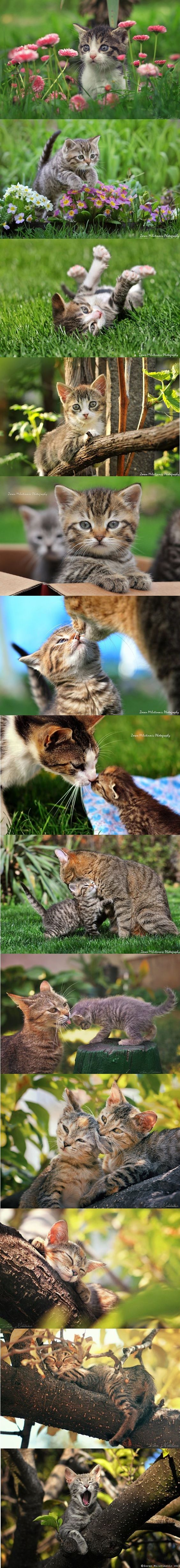 KITTEN photos by ZoranPhoto on DeviantArt #cat cats kitty kitten animal pet cute adorable nature