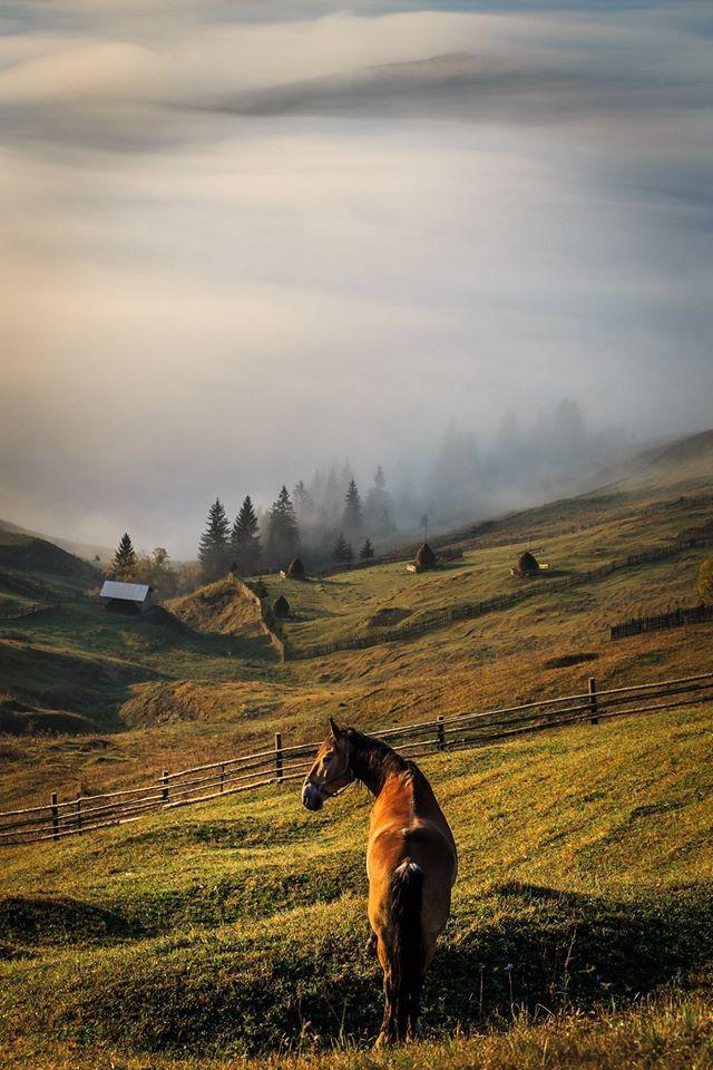 © Catalin Urdoi